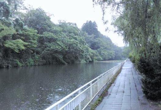雨の早朝ランニングで仙台市博物館そば