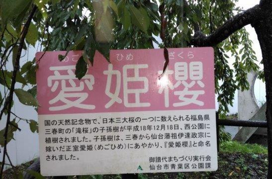 仙台の観光地の愛姫櫻